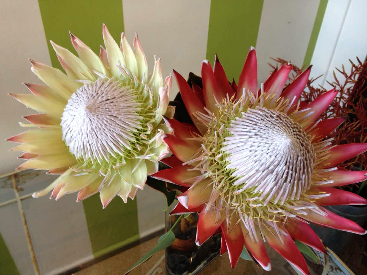 Floral arrangements corona del mar florist for King protea flower arrangements